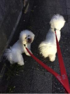 関内の美容室BOBのスタッフの犬の散歩
