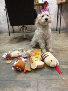 関内の美容室BOBのスタッフの犬