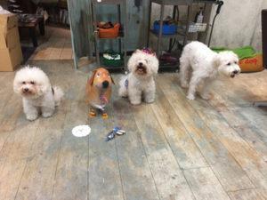 関内の美容室BOBの看板犬